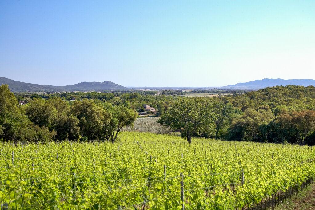 Cibo e Vino e Cultura  per il Turismo in Toscana