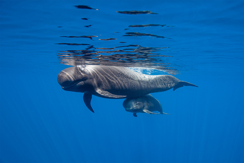 Tenerife Whale Heritage Sites