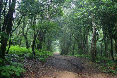 Foreste Preistoriche