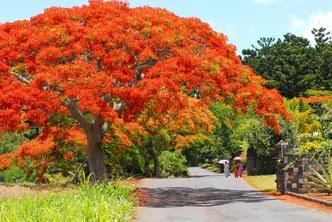 Mauritius in fiore