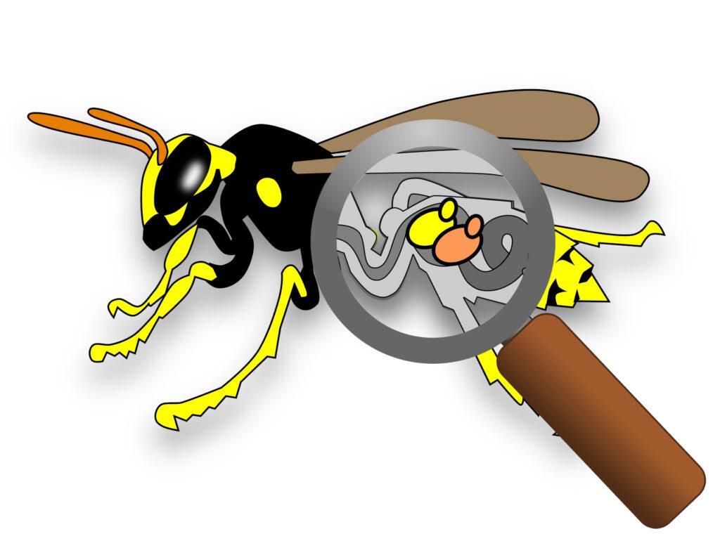 Perché le vespe sono afrodisiache
