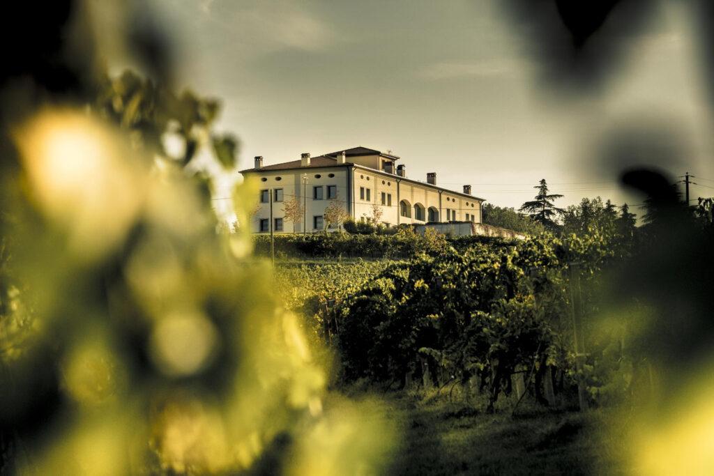 Wine Experience su percorsi topici della Romagna