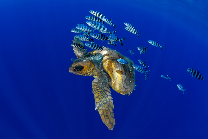 World Ocean Day alle Isole Canarie
