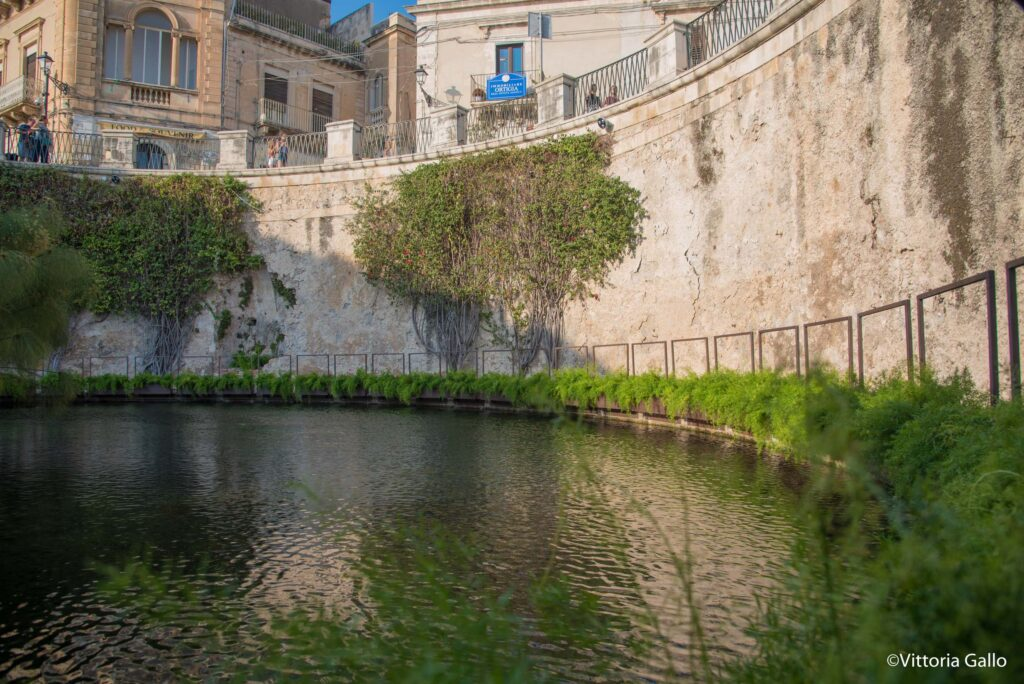Siracusa visite guidate  alla Fonte Aretusa