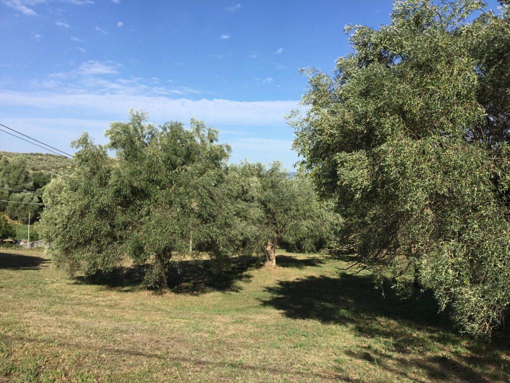 Il Movimento Turismo dell'Olio Toscana